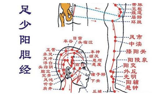 十二经络【足少阳胆经】经络穴位动态图讲解