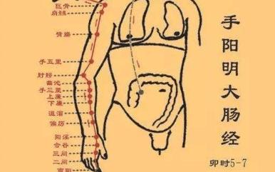 十二经络【手阳明大肠经】经络穴位动态图讲解